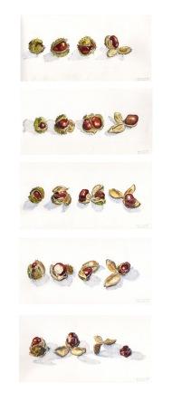 Autumn Spring - '13 - Full Series